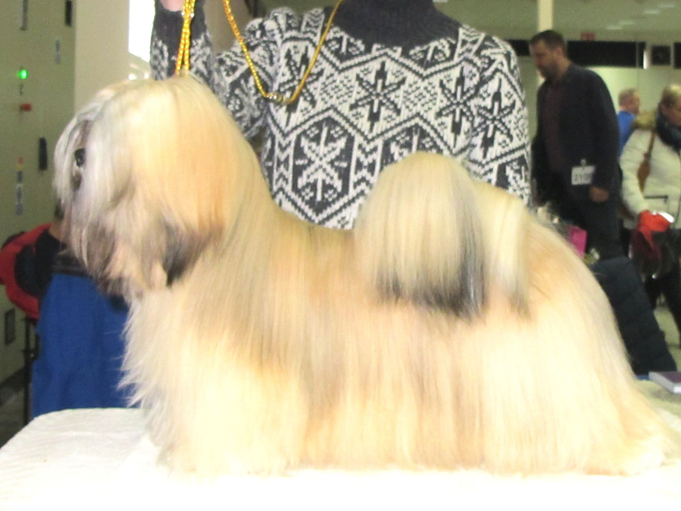 Our champions Lhasa Apso - JCH. ARMANI IVEPET Latgate
