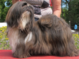 http://www.lhasaapso-ivepet.sk/preview/news_145.jpg