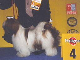 http://www.lhasaapso-ivepet.sk/preview/vyst_03.jpg