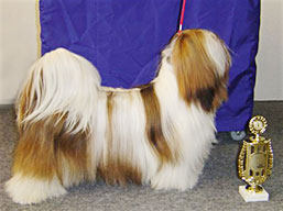http://www.lhasaapso-ivepet.sk/preview/vyst_13.jpg