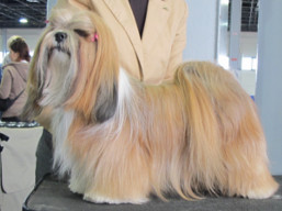 http://www.lhasaapso-ivepet.sk/preview/vyst_741.jpg