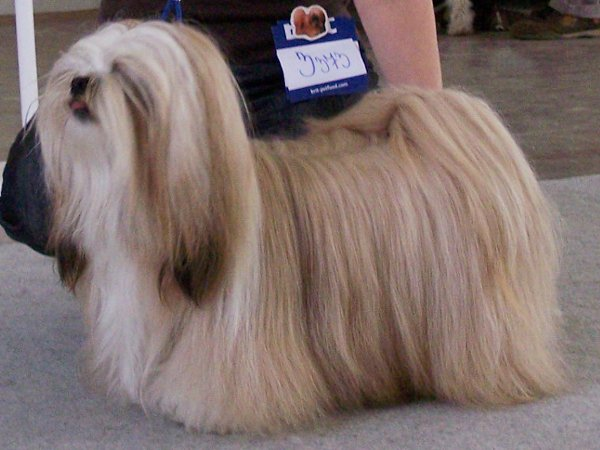 JCH. GRENADA Ivepet, Lhasa Apso