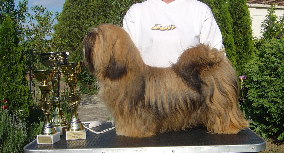 JCH. SHADOW MOON Ivepet, Lhasa Apso